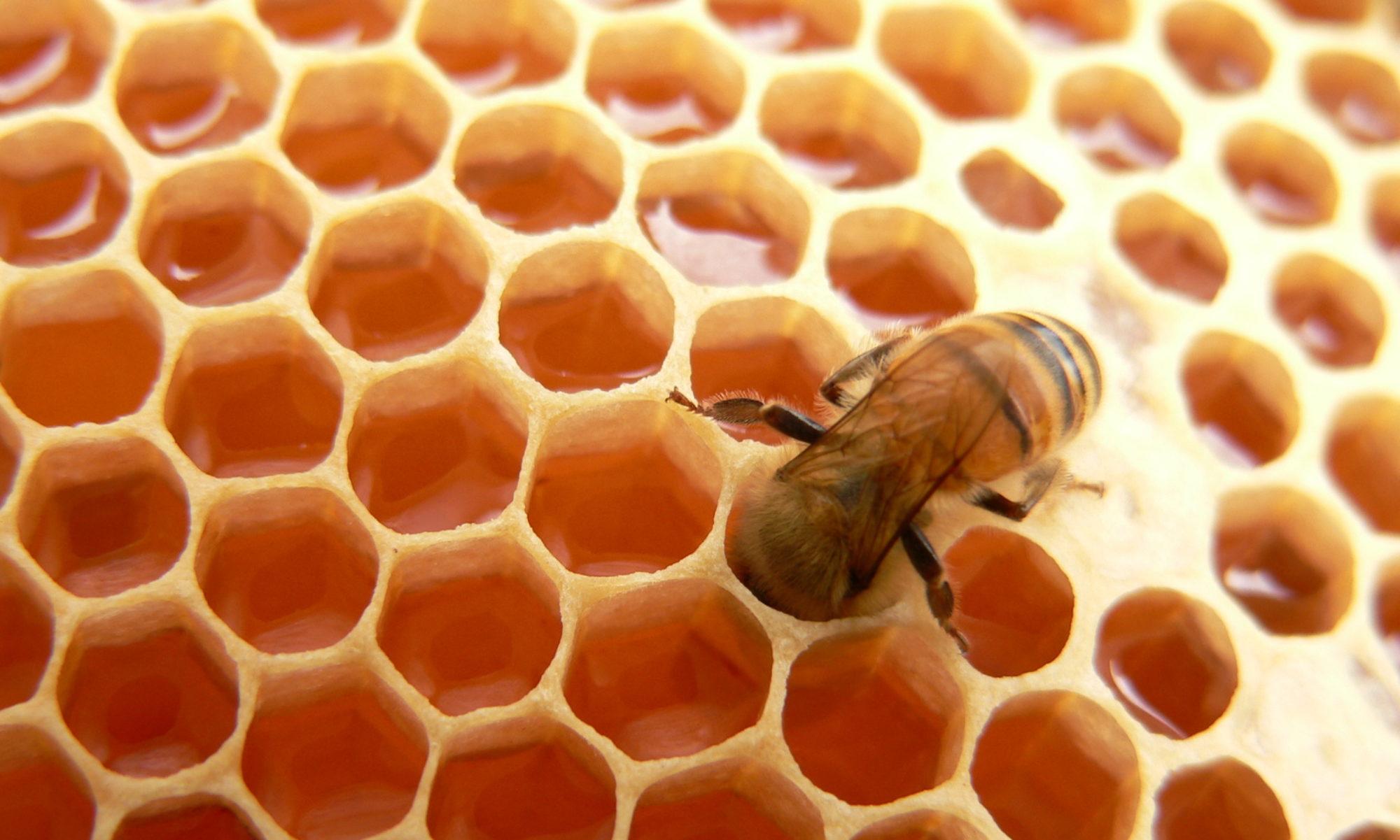 Sven's Bienen